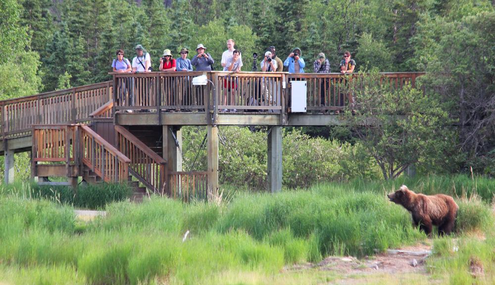 Brooks Lodge Bear Viewing Platform
